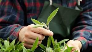 Aanleg van planten door hovenier